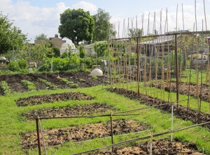 allotment-info-fpw